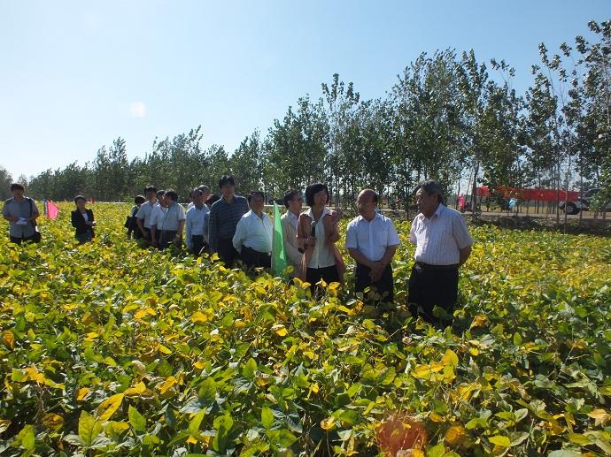 房延修书记出席 优质高产大豆新品种示范及高效种植 现场观摩会